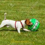 cane-gioca-palla-animali